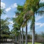 Hacienda Tacubaya 7