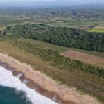 Vainilla Tonameca /desde 1 -100 hectareas/ Frente de playa 4