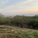Lomas de la Barra / 5000 m2 / Vista al mar 5