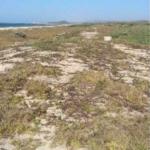 Bajos de Coyula/ 5 hectáreas /frente de playa 5