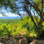 Recidencial el bosque /$1300m2/8 hectáreas / Varias medidas 7