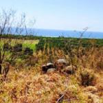Recidencial el bosque /$1300m2/8 hectáreas / Varias medidas 9