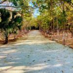 Recidencial el bosque /$1300m2/8 hectáreas / Varias medidas 10
