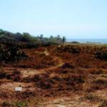 Playa agua blanca/2,268m2/frente de playa 5