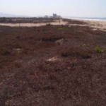 Playa Palmarito/ 1 Hectarea / Frente de Playa 7