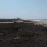 Playa Palmarito/ 1 Hectarea / Frente de Playa 6