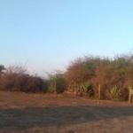 Santa Elena el Tule/Terreno de 14000 m²/Frente de playa 3