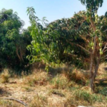 Hectare 10,000 m² in Manialtepec / Río and close to beaches 3