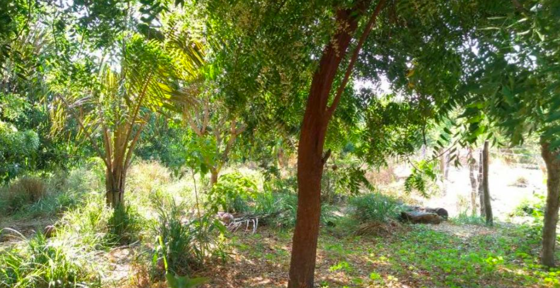Hectare 10,000 m² in Manialtepec / Río and close to beaches 1