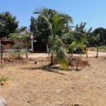 Tamarindos / Terreno 375 m2 / 2 cuadras de la playa 8
