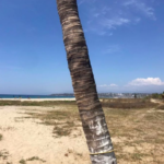 Punta de Zicatela / 1200 m2 / Frente de playa / Concesión 3