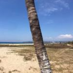 Punta de Zicatela / 1200 m2 / Beach Front 3