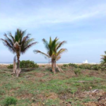 Playa Zicatela/300 m²/Frente de playa 2