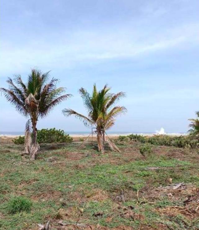 Playa Zicatela/300 m²/Frente de playa 1