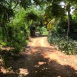 Punta de Zicatela / Terreno 500 m2/ Cerca de carretera 4