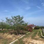Barra Colotepec Foresta / Lote 624 m2 / cerca de la playa 4