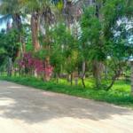 Punta de Zicatela / 1125 m2 / Acceso directo a la Playa 5