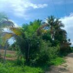 Punta de Zicatela / 1125 m2 / Acceso directo a la Playa 6