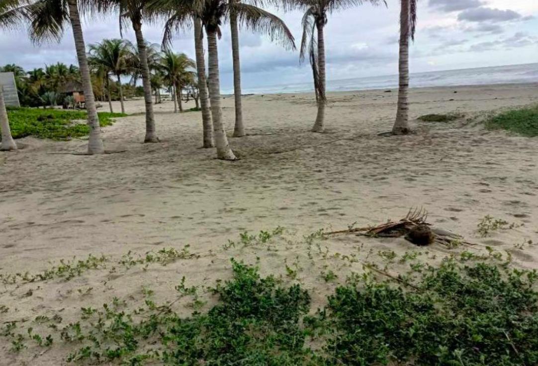 Naranjos /3500 m² / frente de playa / $150 usd x m2 1