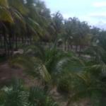 Tomatal / Casa de 3 recamaras / 3600 m2 / Frente de Playa 11