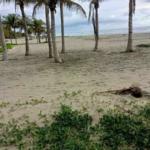 Naranjos /3500 m² / frente de playa / $150 usd x m2 / 2