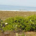 Playa la encomienda / 6 hectáreas / Frente de Playa 2