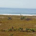 Playa la encomienda / 6 hectáreas / Frente de Playa 4