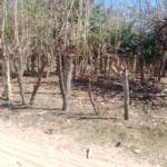 Punta Zicatela / Brisas de Zicatela / 300 m2 / 1 cuadra de la playa 11