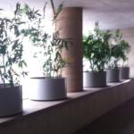 Departamento Bosques de las Lomas / CDMX 5