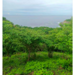 Puerto Angel/playa Estacahuite/900 m²/vista panorámica 2