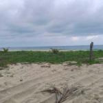 Playa Puerto Suelo/10,000 M2 / 150 metros lineales de playa 2
