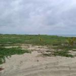 Playa Puerto Suelo/10,000 M2 / 150 metros lineales de playa 3