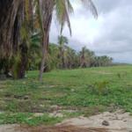 Playa Puerto Suelo/10,000 M2 / 150 metros lineales de playa 4