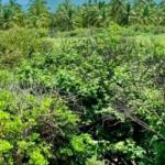 Playa el venado/4915 m²/terreno de playa 4