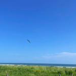 Plataforma / 400 m2 o 800 m2 / a 250 mts de la playa 11