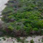 Chacahua / 814 m2 / Frente de playa 5