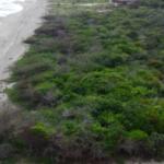 Chacahua / 814 m2 / Frente de playa 7