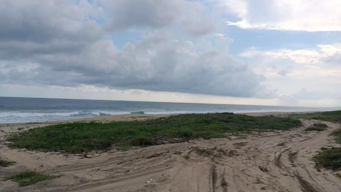 Palmarito / 3 Hectáreas / Frente de playa 1