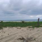 Palmarito / 3 Hectáreas / Frente de playa 3