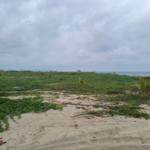 Palmarito / 3 Hectáreas / Frente de playa 4