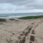 Palmarito / 3 Hectáreas / Frente de playa 6
