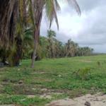 Palmarito / 3 Hectáreas / Frente de playa 7